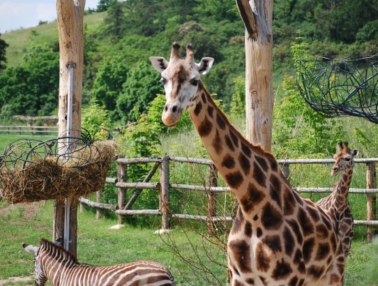 4th best ZOO in the world by Tripadvisor