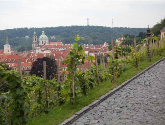 Prague vineyard